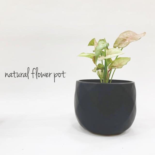 マットブラックの植木鉢に植物が植わっている