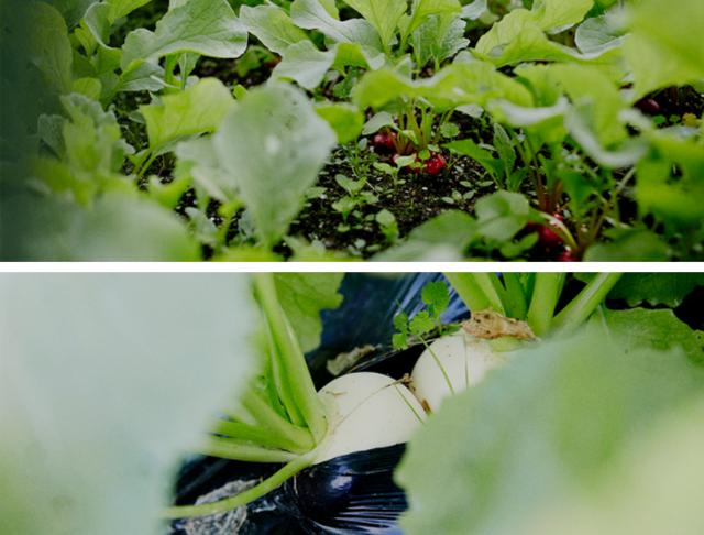 坂ノ途中で栽培される野菜