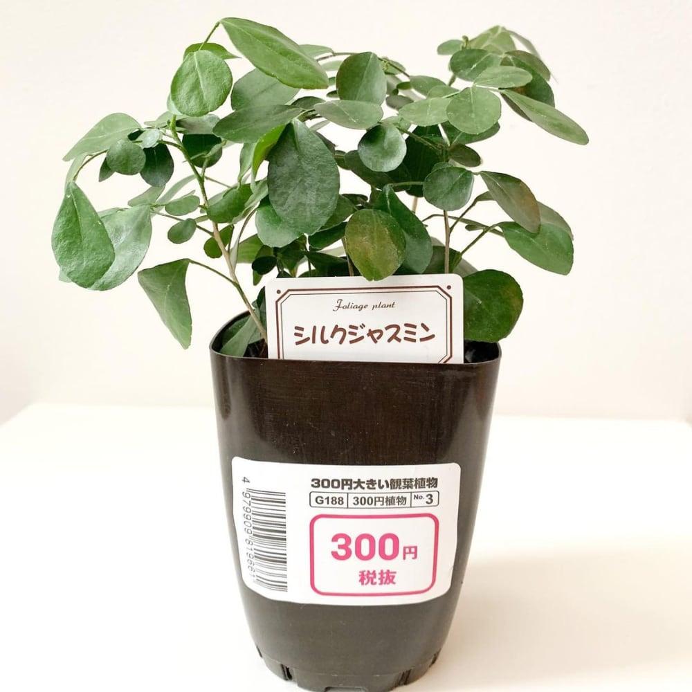 おしゃれな植木鉢&観葉植物