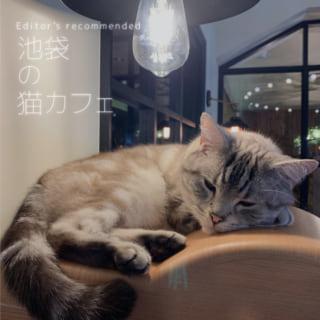 池袋のおすすめする猫カフェ