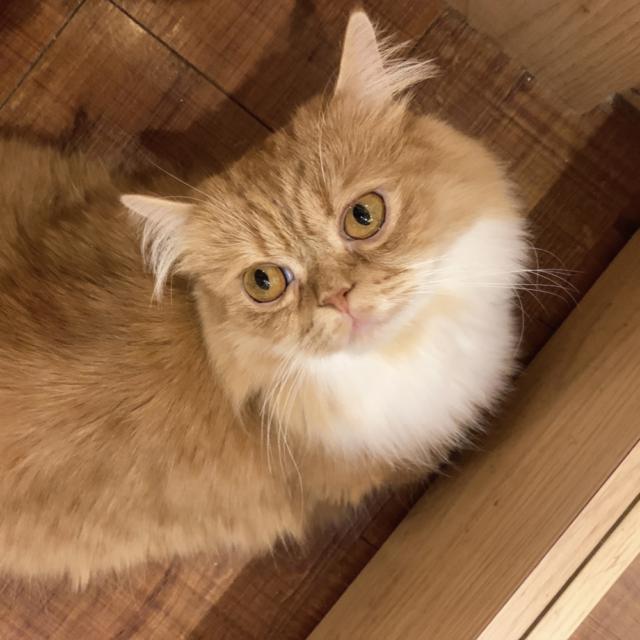 しゃけくん 猫カフェモカ池袋西口店