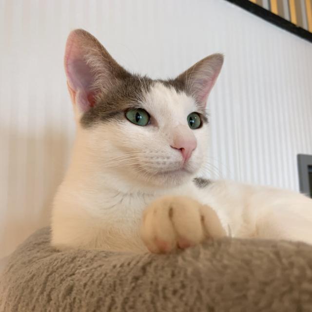 ネコリパブリック 猫カフェ
