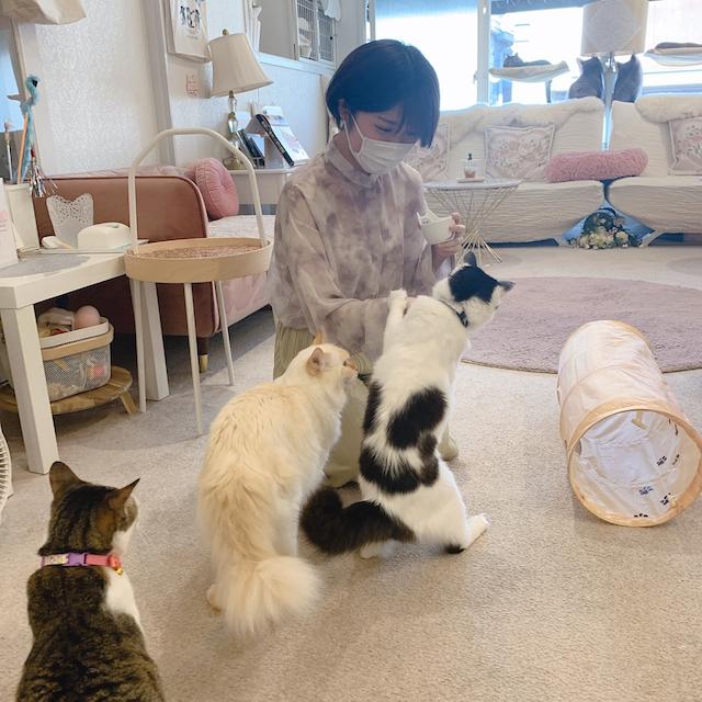 CAT LIVING都立大学の店内