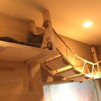 猫喫茶 空陸家 武蔵小山店店内の吊橋